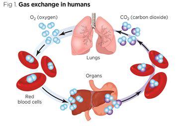 Transport across cell membrane essay